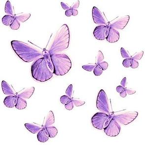 lavender butterflies