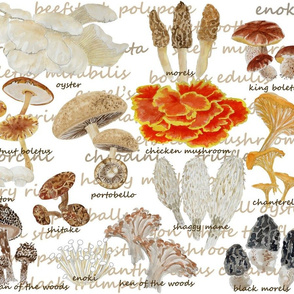 favorite fungi