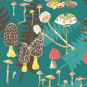 Mushrooms and Ferns