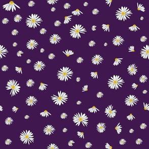 Daisy Dance Purple