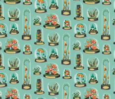 mushrooms terrariums