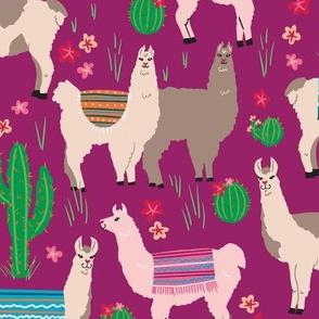 Llamas in Magenta