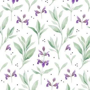 Watercolor Sage Flowers