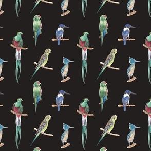 Birds Pattern 1 Dark