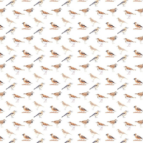 Birds Pattern 3