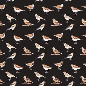 Birds Pattern 3 Dark