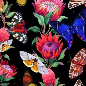 Moths and butterflies among Protea flowers