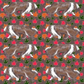 Brown Bearded Collie Maple Leaves brown
