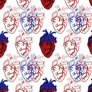 Anatomical Blue and Red Hearts small scale