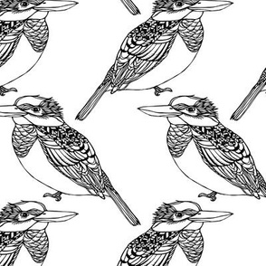 Kingfisher Black & White
