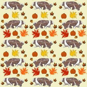 Brown Bearded Collie Pumpkins Oak Leaves Maple Acorns