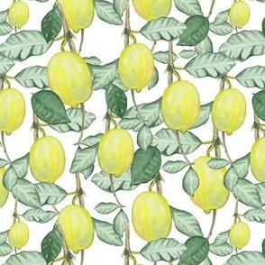 Citrus Pattern 1