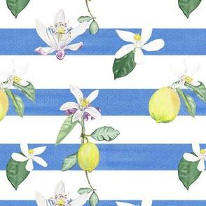 Citrus Pattern 4