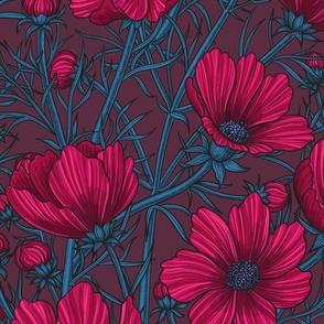 Red Cosmos flowers on dark background