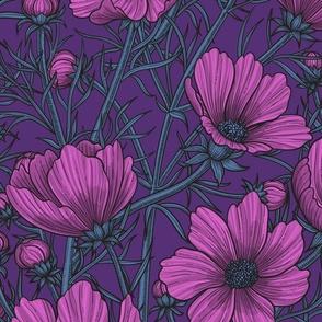 Violet cosmos flowers on dark background