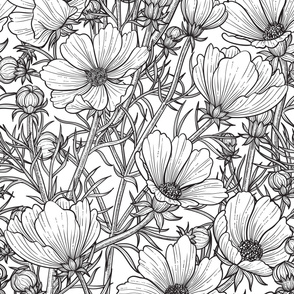 Line drawing of cosmos flower in black and white