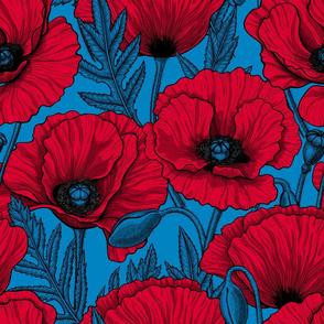 Red Poppy garden on blue