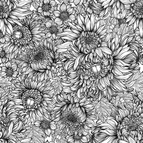 Chrysanthemum flowers and bettles in black and white