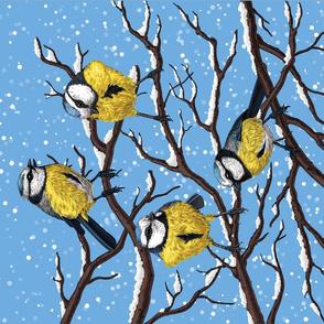 Blue tit birds in winter