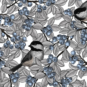 Chickadee birds on blueberry branches 5