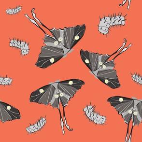 Halloween Luna Moths