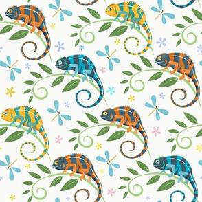 Colorful chameleons white