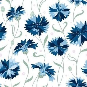 Blue cornflower on white