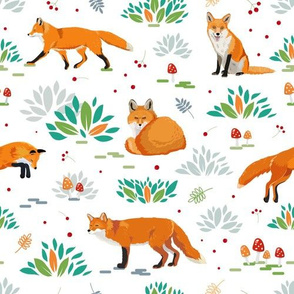 Red foxes white