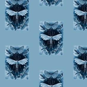Ernst Haeckel Tineida Moths Blue Border