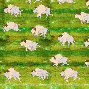 White Buffalo Herd Grass