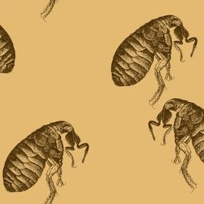 March of the Fleas Seven