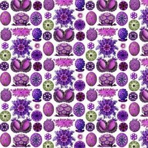 Ernst Haeckel Ascidiae_aw_purple small