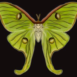 Medium Luna Moth