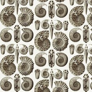 Ernst Haeckel Ammonitida Ammonite Coffee