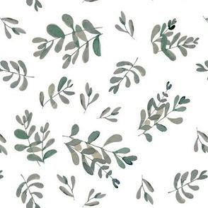 Salvia white