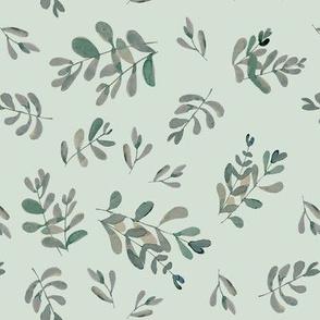 Salvia lightgreen