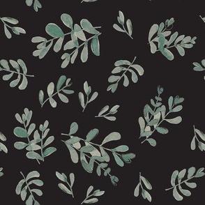 Salvia black
