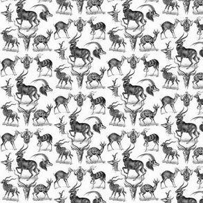Ernst Haeckel Antilopina Antelope Ditsy