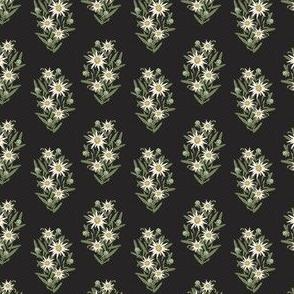 Edelweiss black