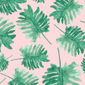Monstera Plants on Pink