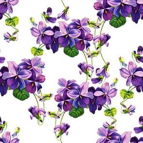 Vintage violets print (large)