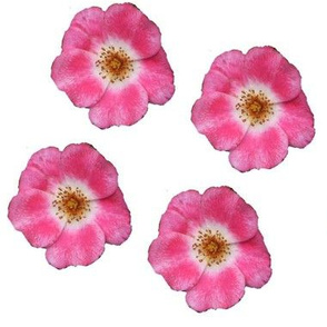 single_roses_Picnik_collage