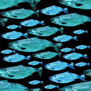 Salmon in Blues on Black