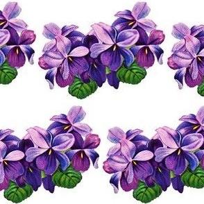 Vintage violets 2 (large)