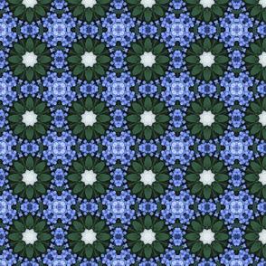 Blue Lace Cap Hydrangeas 1577