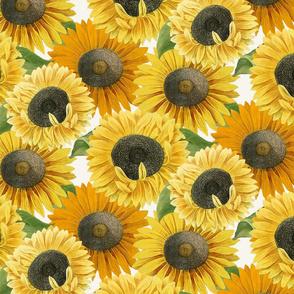 Sunny Season Blooms