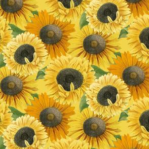 Sunny Season Blooms: Golden