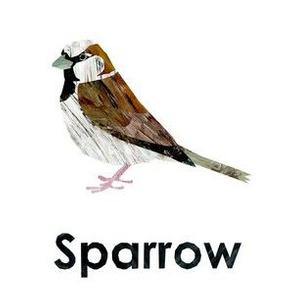 "Sparrow - 6"" Panel"