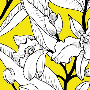 White Yellow Orchid 2020