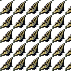 Butterfly for Butterfly fabric